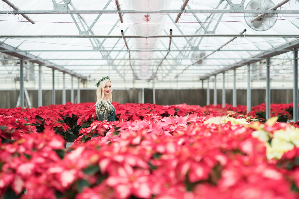 Christmas Poinsettia Greenhouse Bridal Pictures Wedding ...
