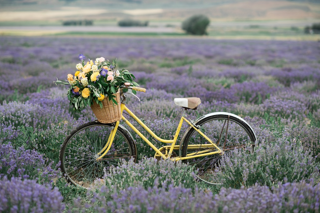 bicycle flower ideas, vintage bicycle with flowers, South of France wedding, lavender inspired wedding ideas, wedding flowers utah calie rose