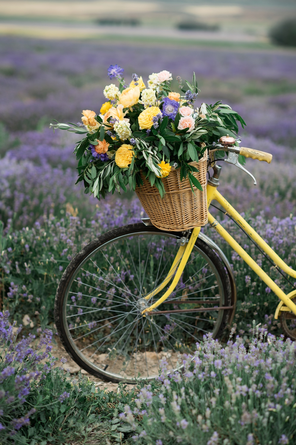 South of France Wedding, lavender field wedding, lavender wedding ideas, lavender inspired wedding, wedding flowers utah calie rose, bicycle flowers, vintage bicycle with flowers